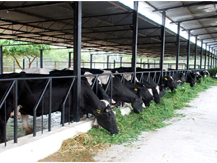 Business Plan For Dairy Farming